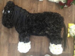 Black cob horse